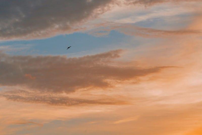 Lone bird of prey soaring in an orange and blue sky
